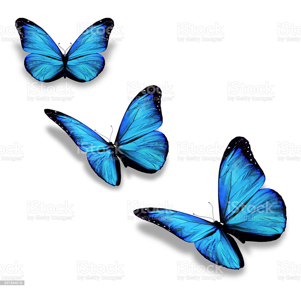 Three blue butterflies, isolated on white stock photo
