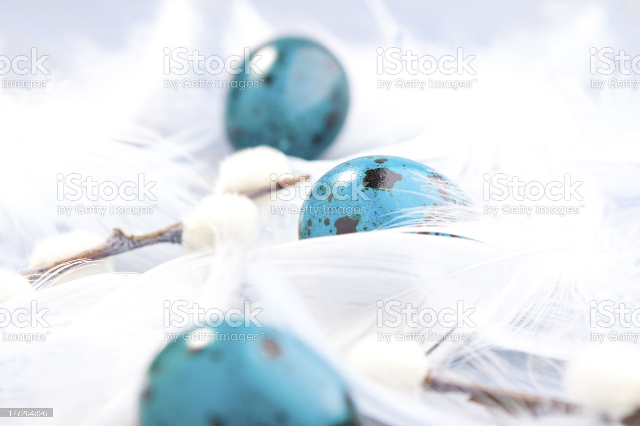 Three blue eggs royalty-free stock photo