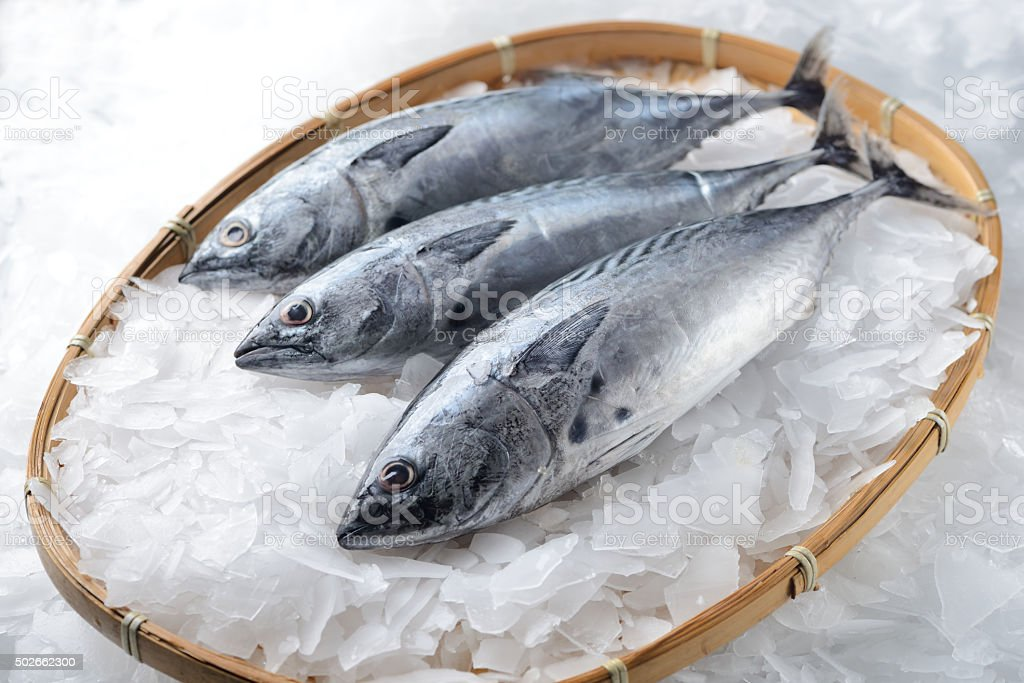 Three bonito tuna fish stock photo