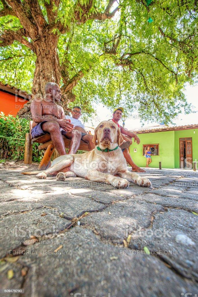 Praia Do Forte, Brazil - January 30, 2016: Three Brazilian men and...