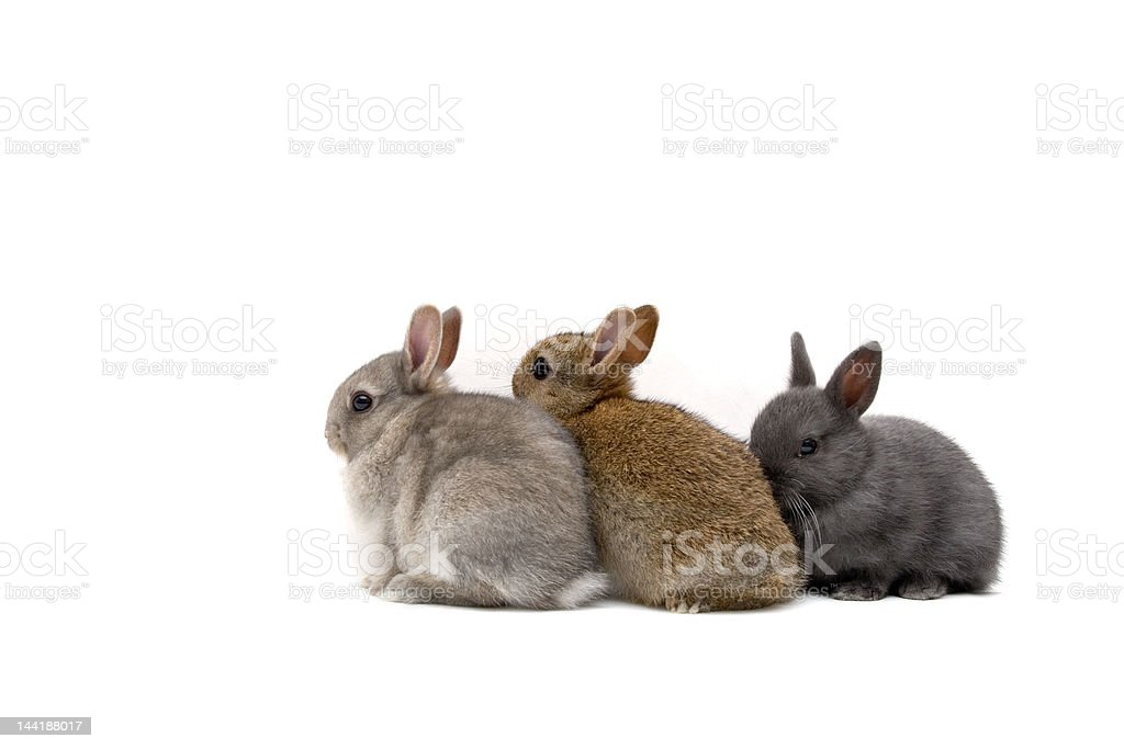 Three Bunnies stock photo
