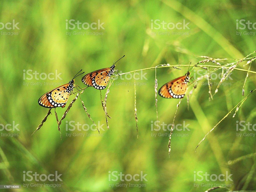Three butterflies on grass. stock photo