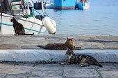 Three cats at Hydra harbor in Greece