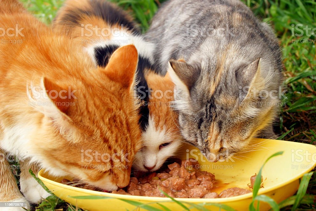 Three cats royalty-free stock photo