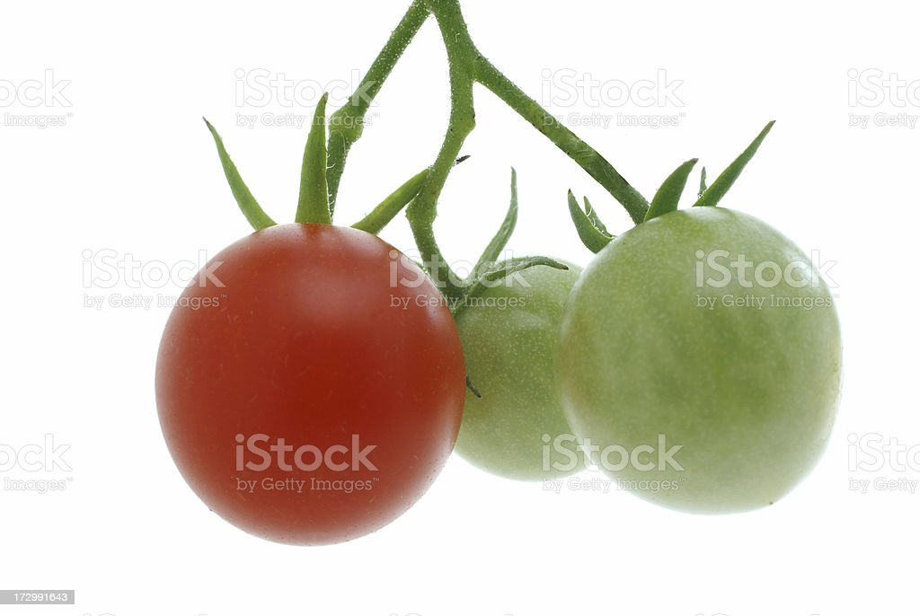 three cherry tomatoes on vine royalty-free stock photo