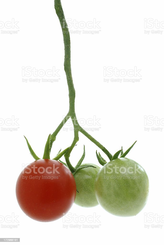 three cherry tomatoes on vine vertical royalty-free stock photo