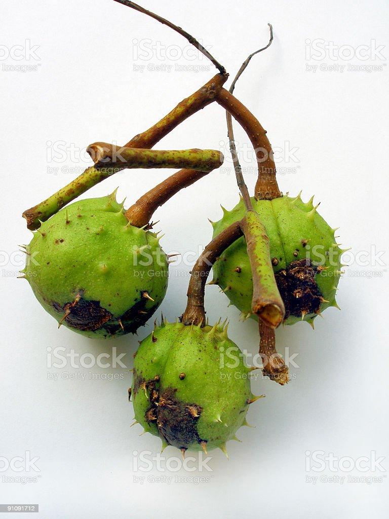 three chestnuts stock photo