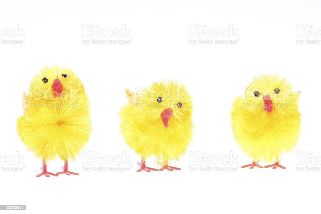 Three chicken in a row royalty-free stock photo