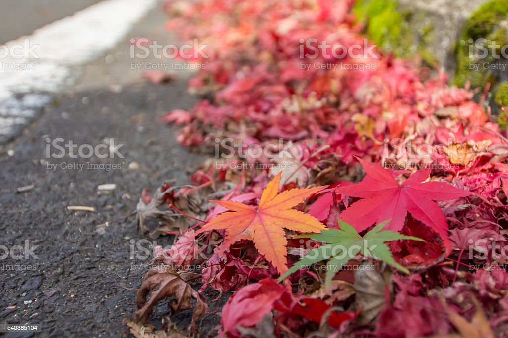 Three Color and Line stock photo