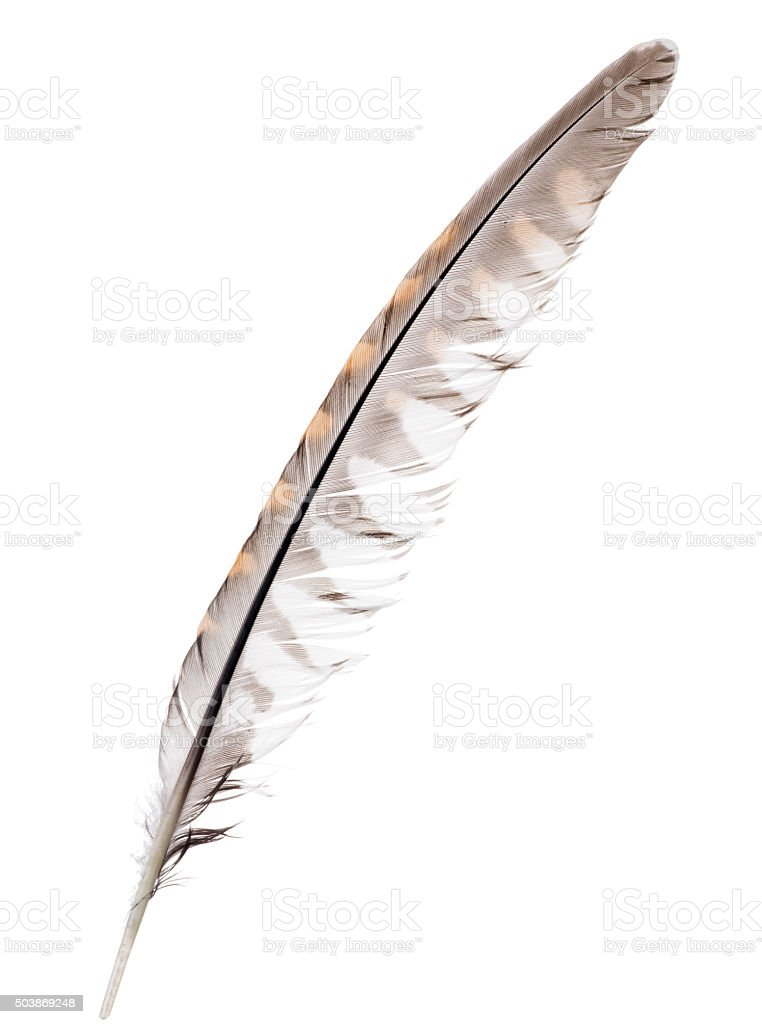 three color forest bird isolated feather stock photo