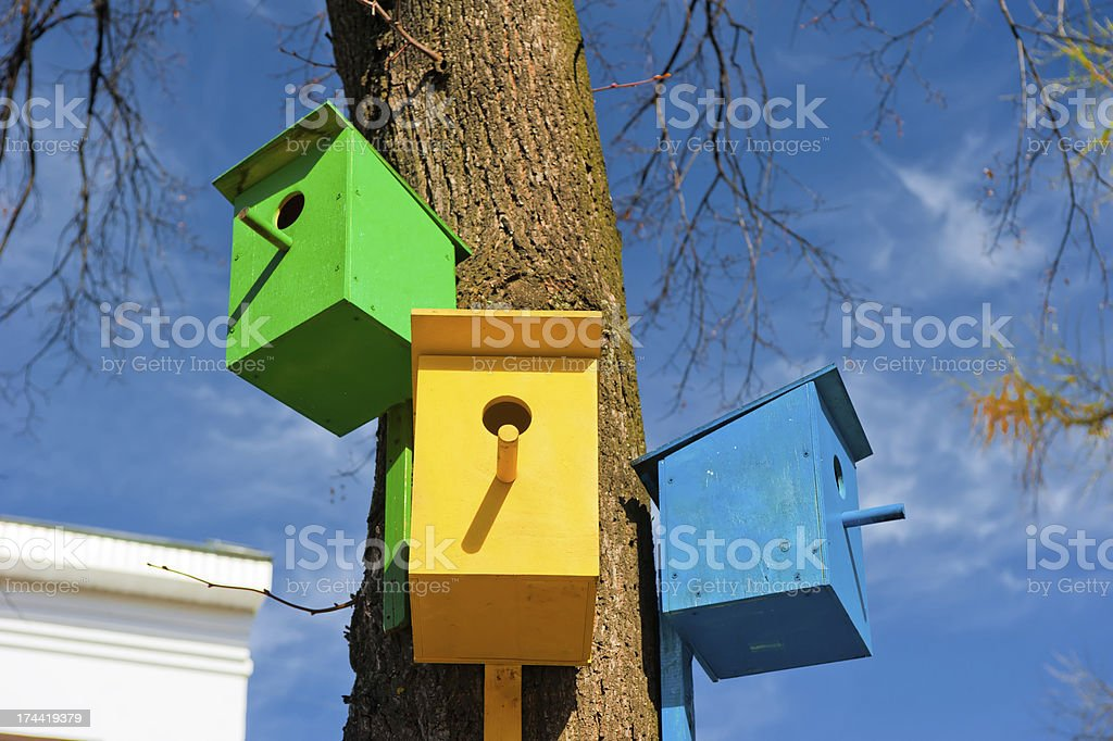 Three colorful birdhouse attached to a tree against the sky royalty-free stock photo