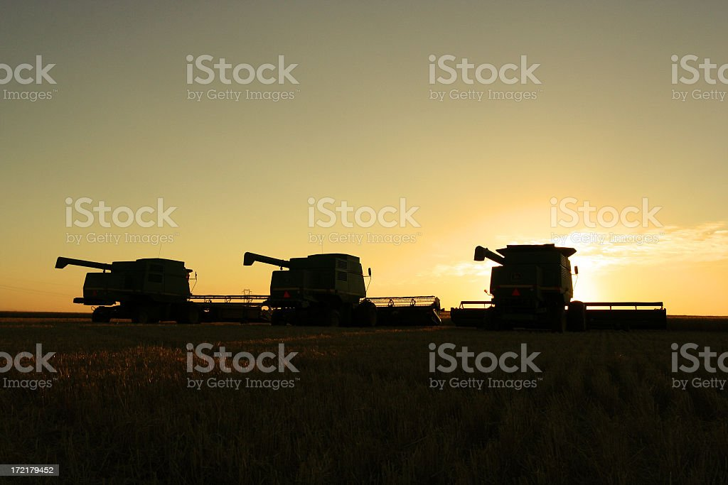 Three combines silhouetted at twilight in prairie field royalty-free stock photo