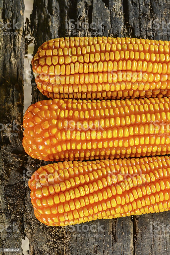 Three corn royalty-free stock photo