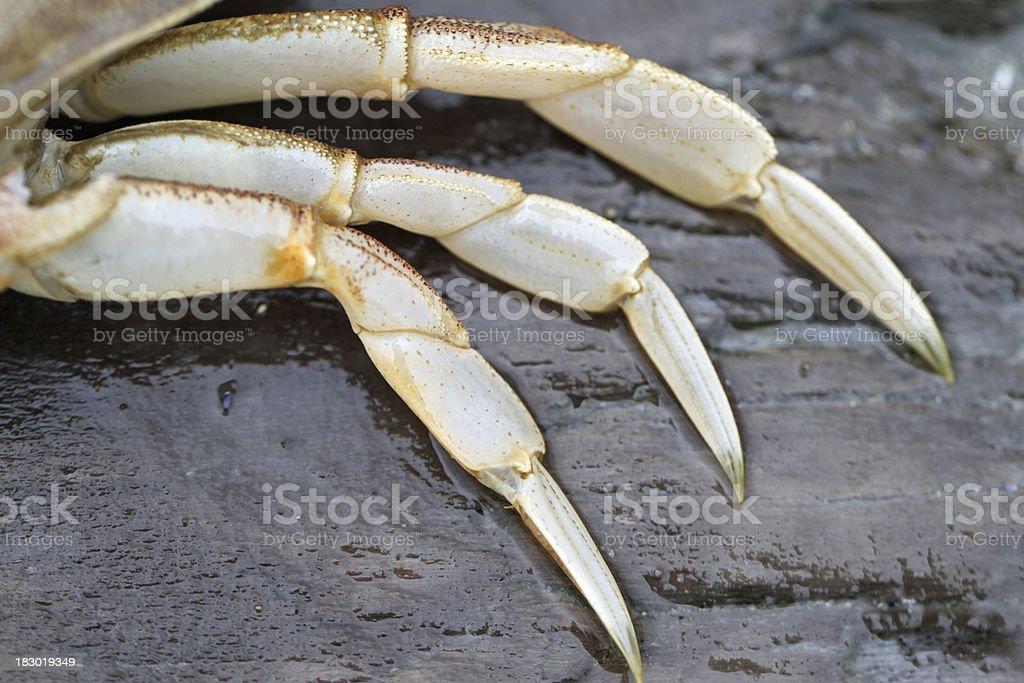 Three Crab Legs stock photo