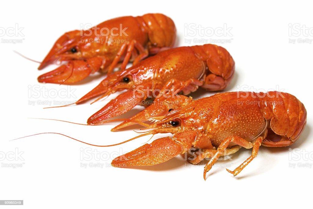 three crayfishes royalty-free stock photo