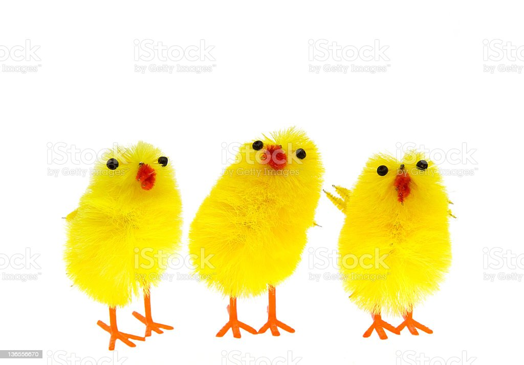 Three curious little yellow chicken puppets royalty-free stock photo