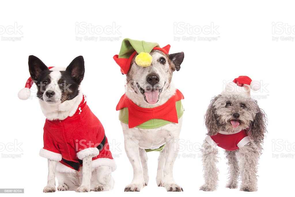 Three Cute Christmas Dogs stock photo