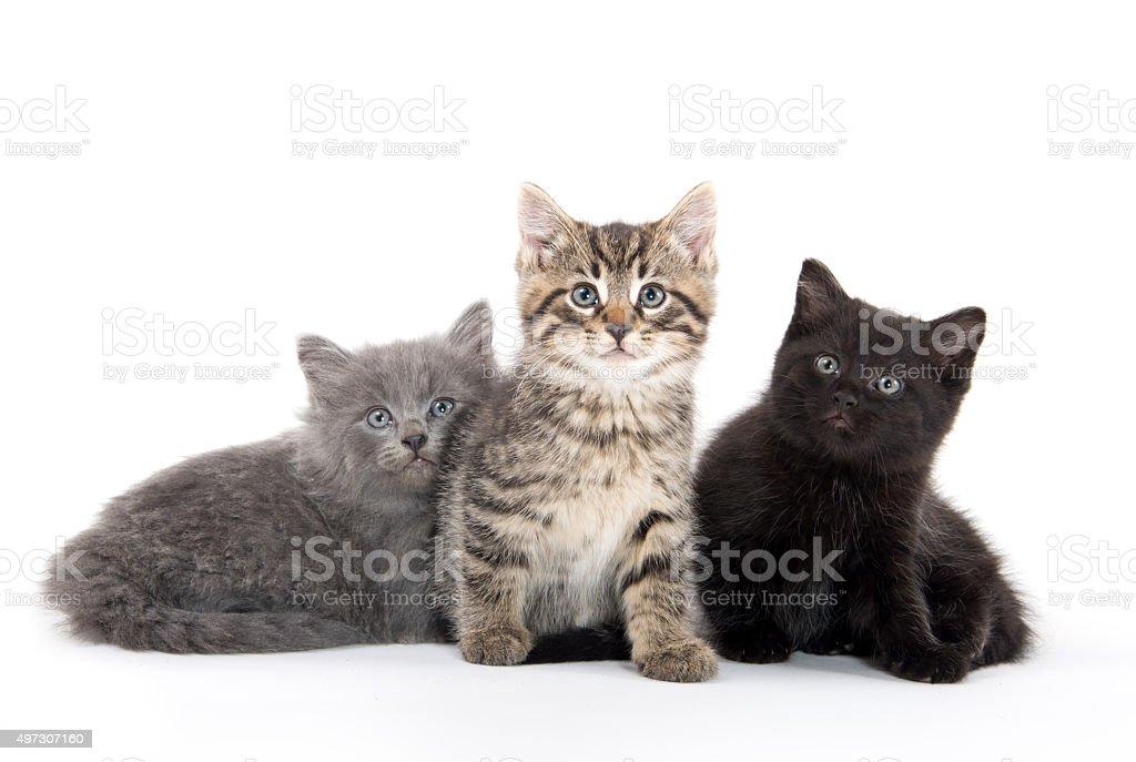 Three cute kittens stock photo