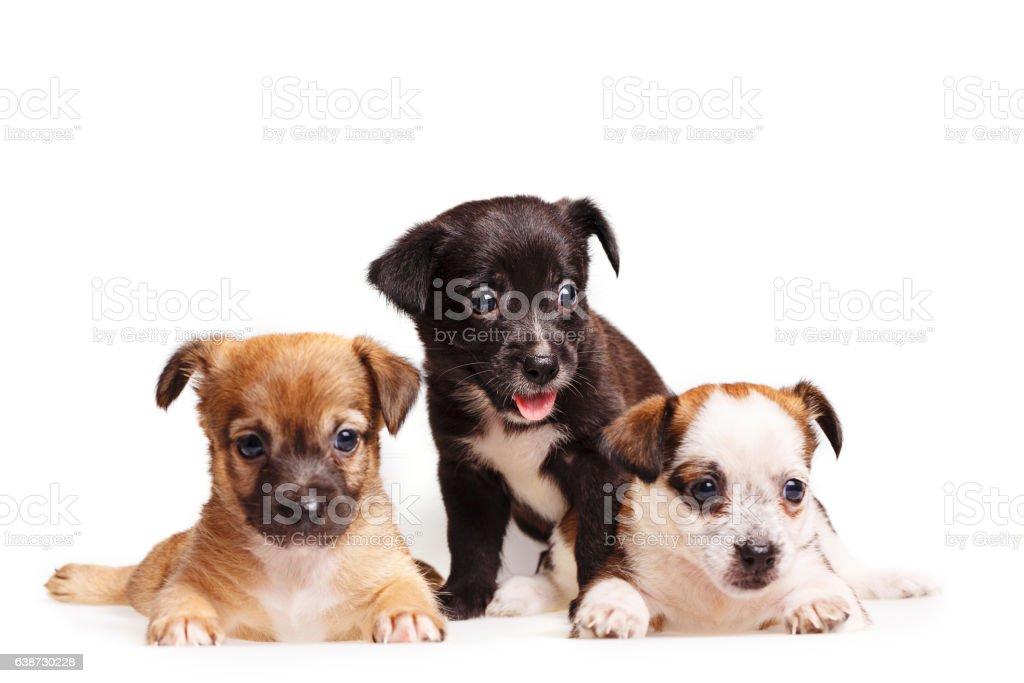 Three cute puppy stock photo
