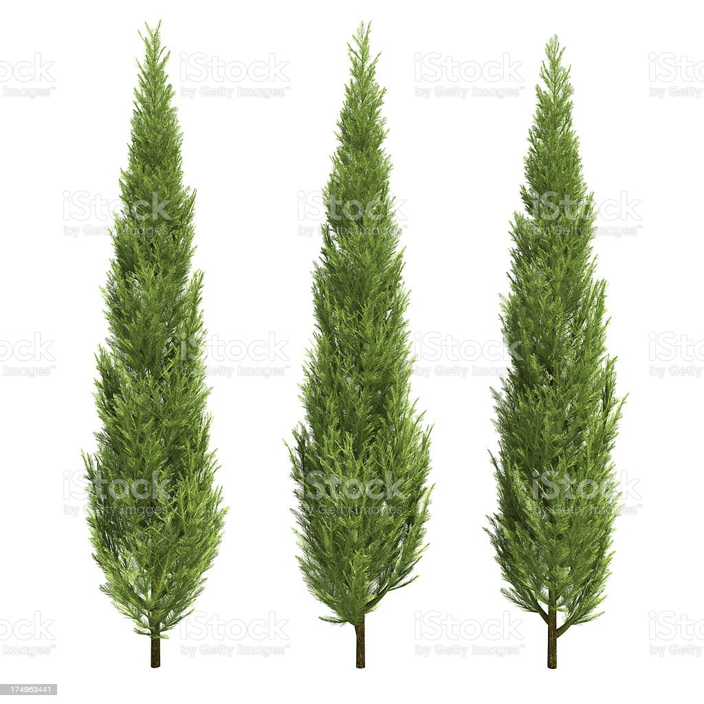three cypress stock photo