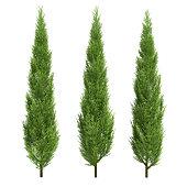 three cypress