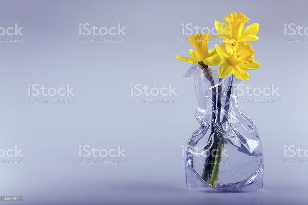 Three daffodils and space stock photo