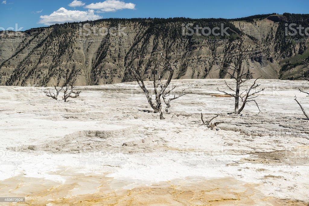 Three Dead Tress at Mammoth Hot Springs Yellowstone National Park royalty-free stock photo