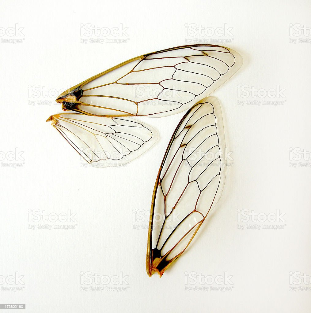Three different insect wings in a white background stock photo