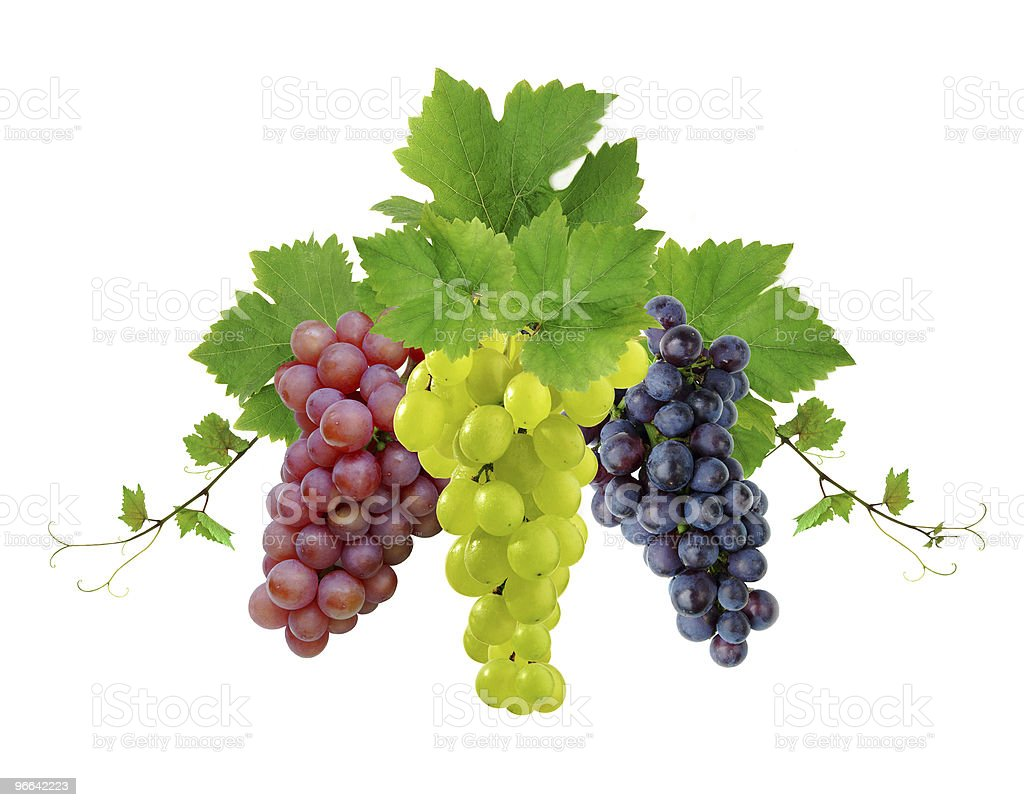 Three different types of grapes hanging stock photo