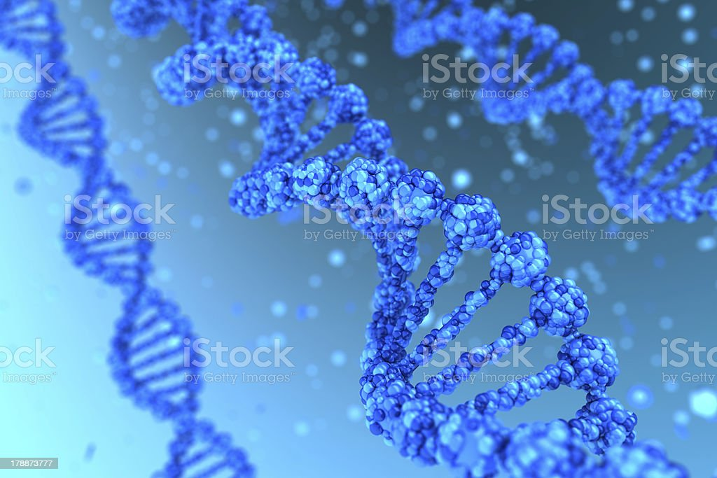 Three dimensional depictions of the DNA double helix stock photo