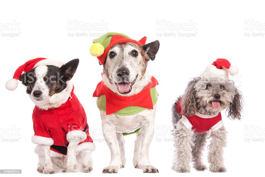 Three Dogs Christmas stock photo