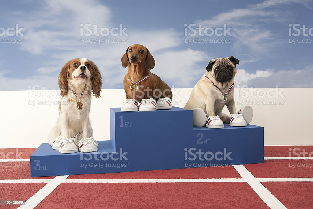 Three dogs on Winners Podium stock photo