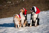 Three dogs with Santa hats in snow
