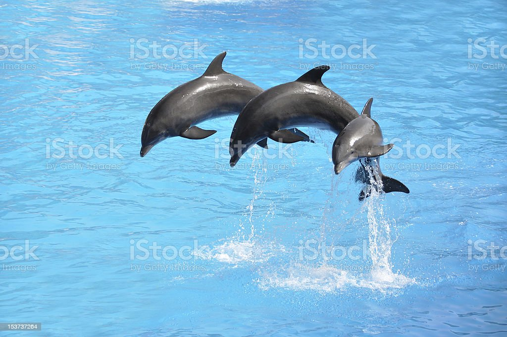 Three dolphins stock photo
