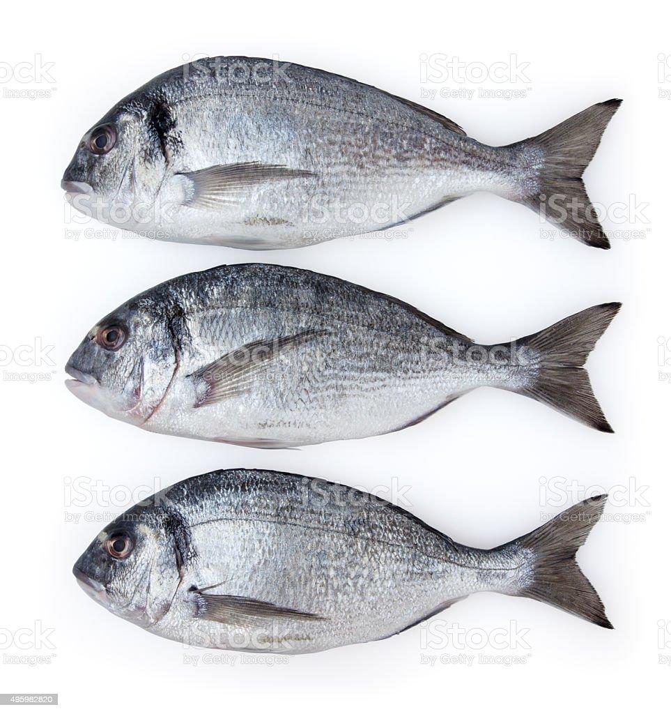 Three dorado fishs isolated on white background stock photo