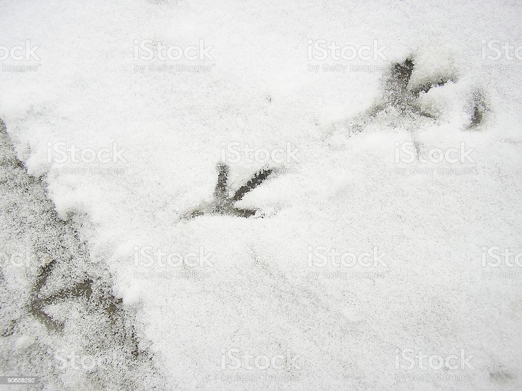 Three doves traces royalty-free stock photo
