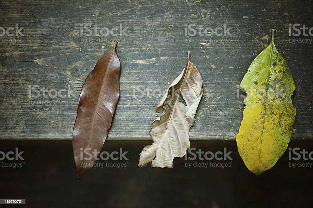 Three Dry Leaves stock photo