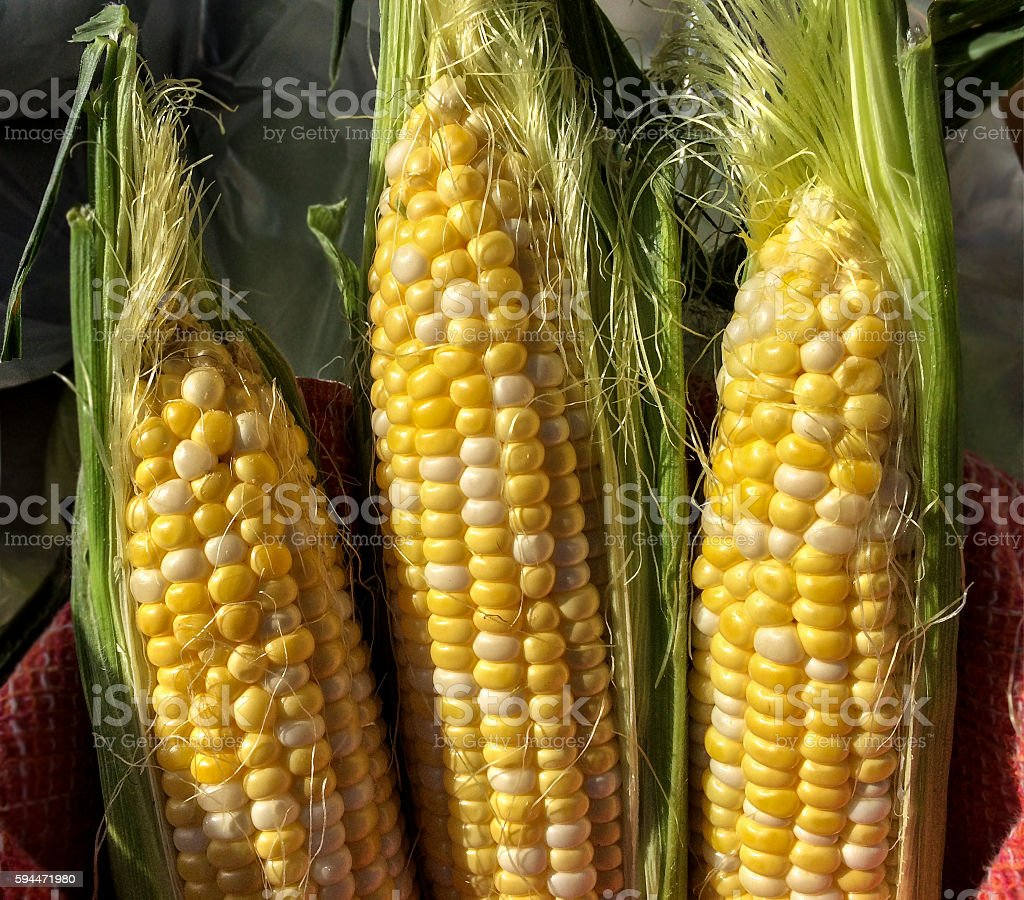 Three ears of sweet corn stock photo