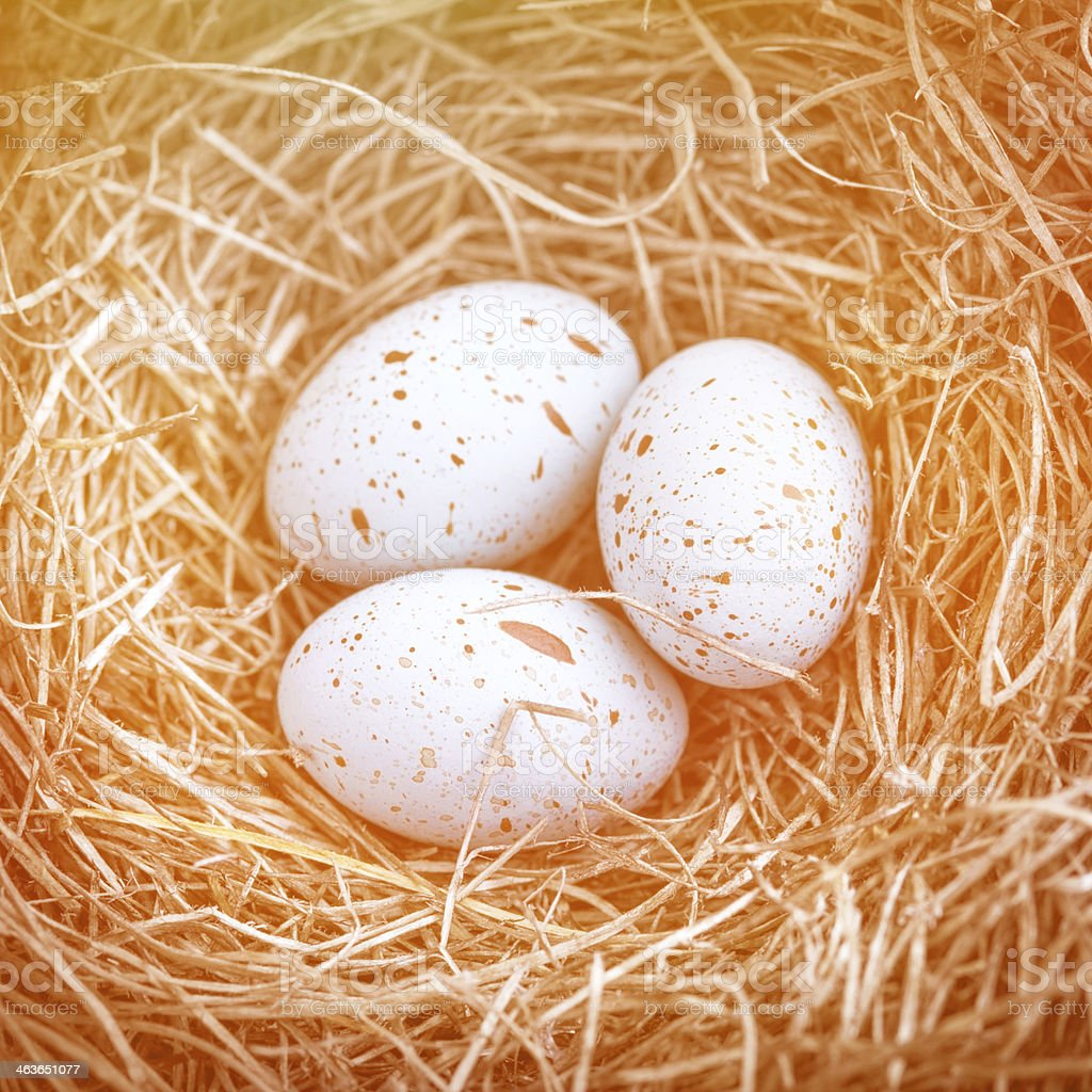 Three eggs in the nest for easter stock photo