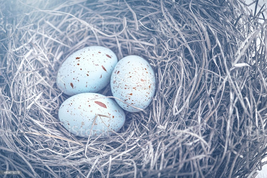 Three eggs in the nest for easter with dreamy toning stock photo