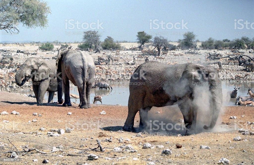 Three elephants and huge herds of zebra and antelope at waterhole, National Park Etosha, Namibia stock photo