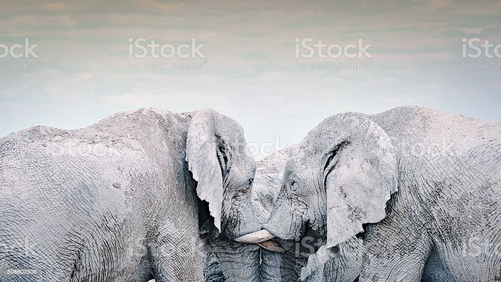 Three elephants socializing together stock photo