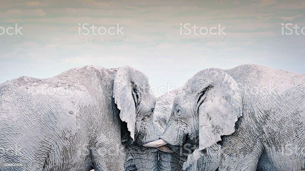Three elephants socializing together stock photo