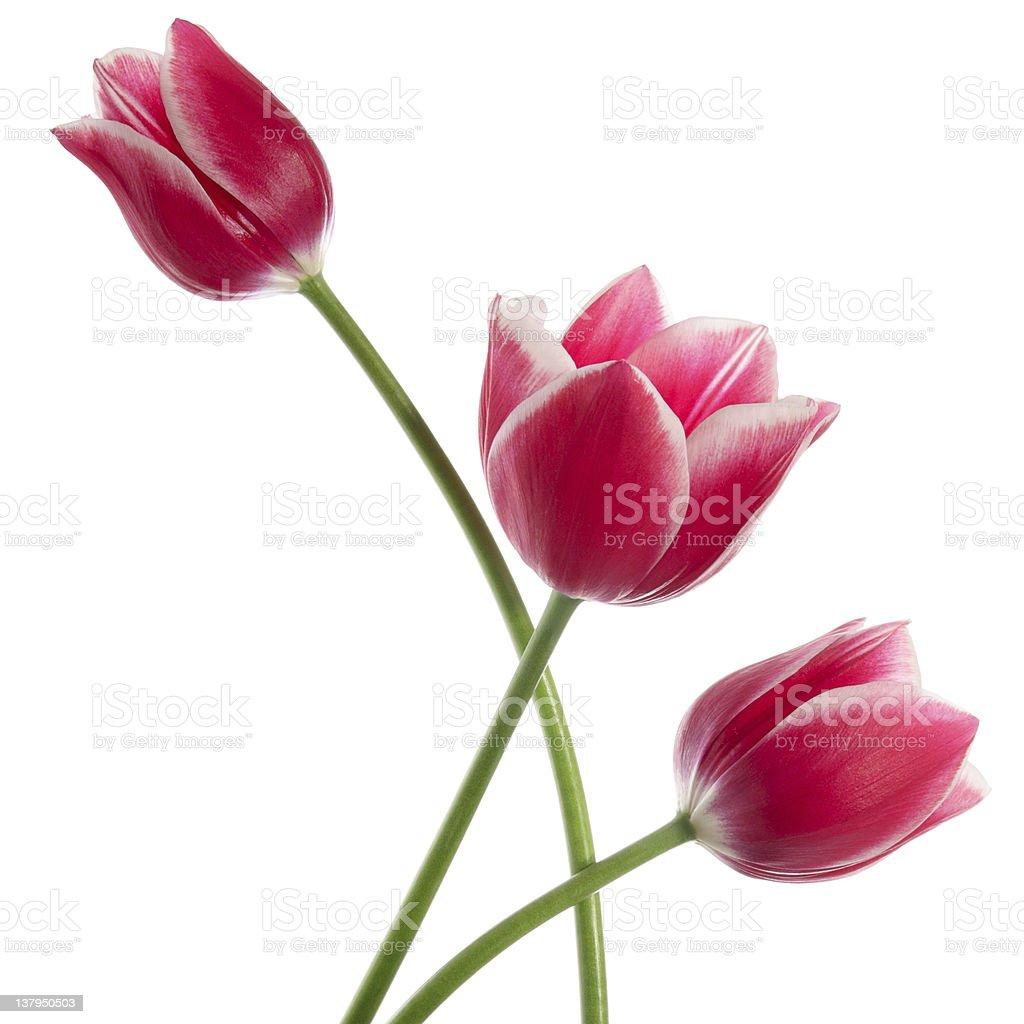 Three fine flowers stock photo