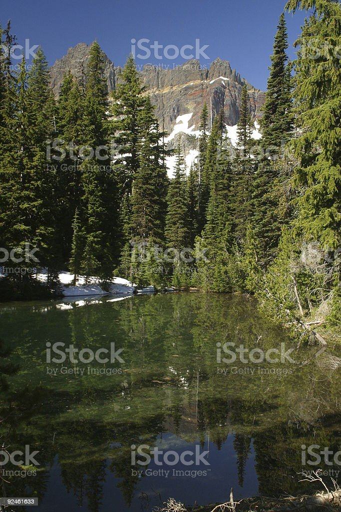 Three fingered Jack royalty-free stock photo