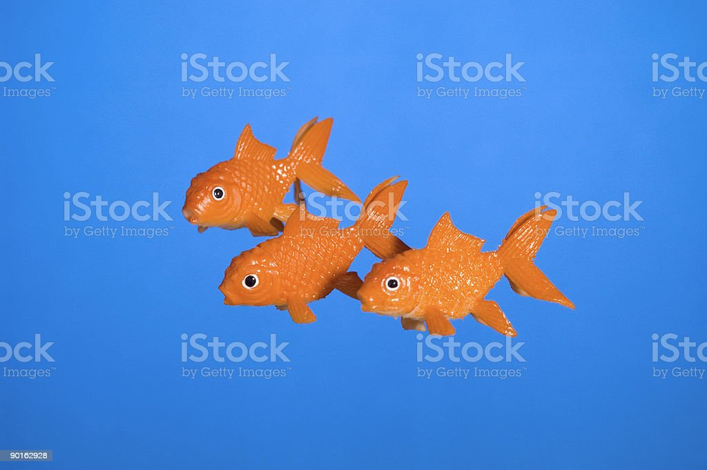 Three Fish stock photo