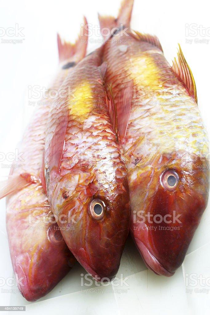 Three Fishes royalty-free stock photo