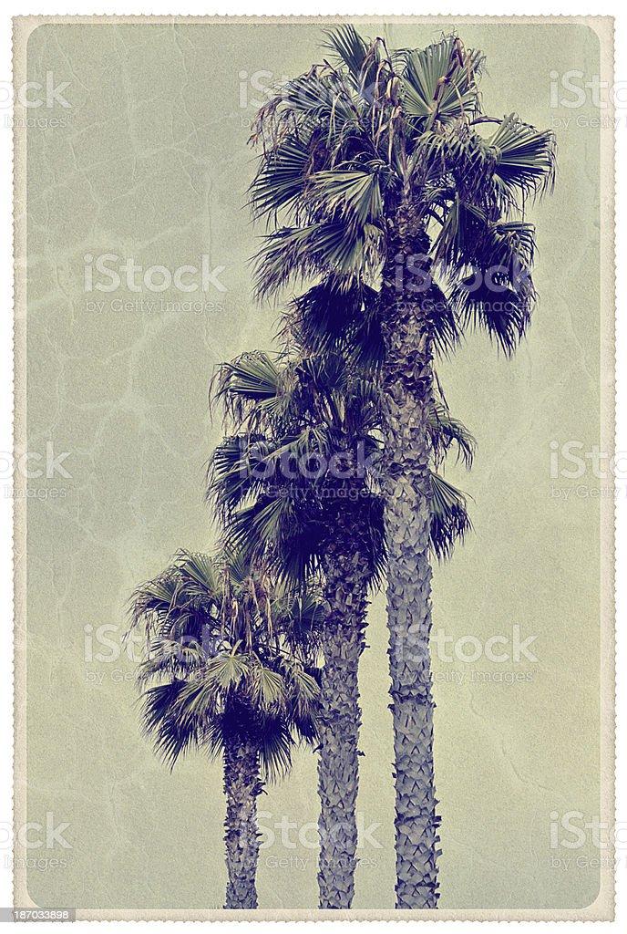 Three Florida Palm Trees - Vintage Postcard royalty-free stock photo