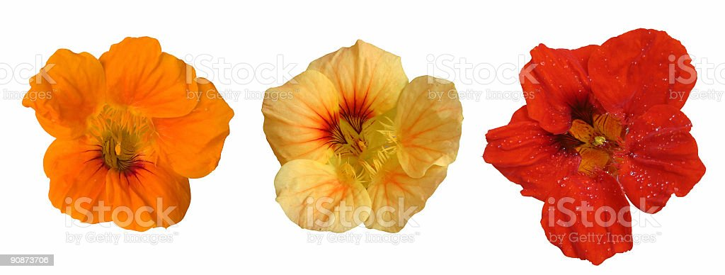 Three flower heads stock photo