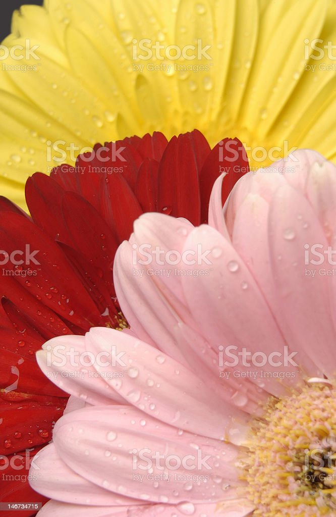 Three Flowers royalty-free stock photo